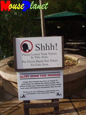 "San Diego Zoo Baby Panda Exhibit: The Zoo takes the ""quiet zone"" near the panda exhibit very seriously. Photo by Lisa Perkis, copyright MousePlanet."