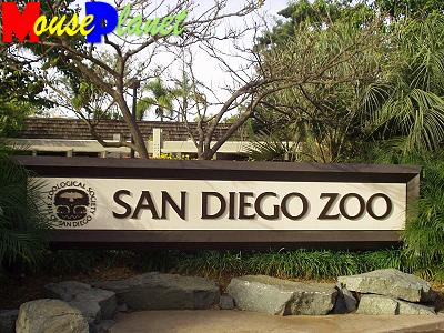 San Diego Zoo Baby Panda Exhibit: San Diego Zoo Baby Panda Exhibit: The Zoological Society of San Diego. Photo by Lisa Perkis, copyright MousePlanet.