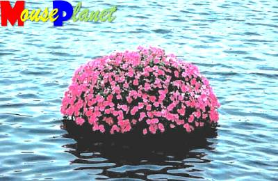 A Floating Garden.  These floats are anchored, so they don't move around the pond.