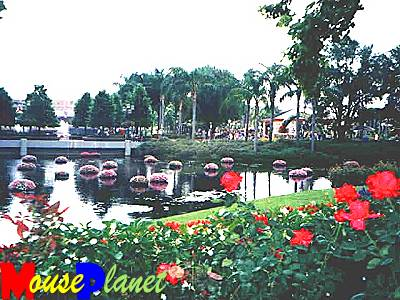 The pond between the walkway (which connects Future World and World Showcase) and the rose walk.  You can see some of the roses in the foreground.