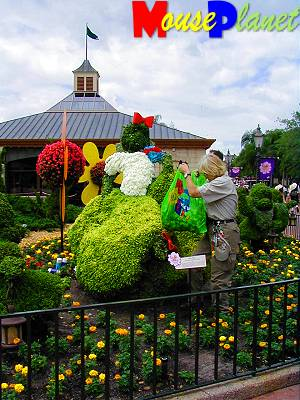 While we were touring the park, we saw some horticultural cast members working away on the Snow White topiary, replacing the red sleeves of her dress, and refreshing her blue-colored bodice.